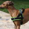 DG STYLE HARNESS